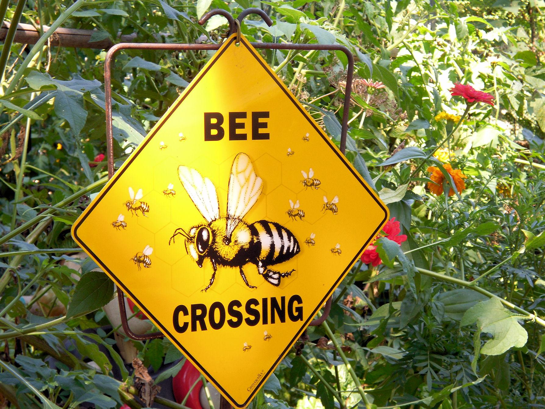 Bee Crossing 8.27.11